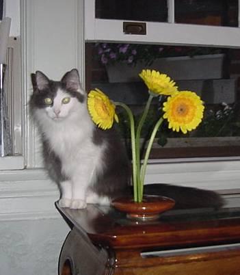 Daisy always kept a close eye on those shifty flowers
