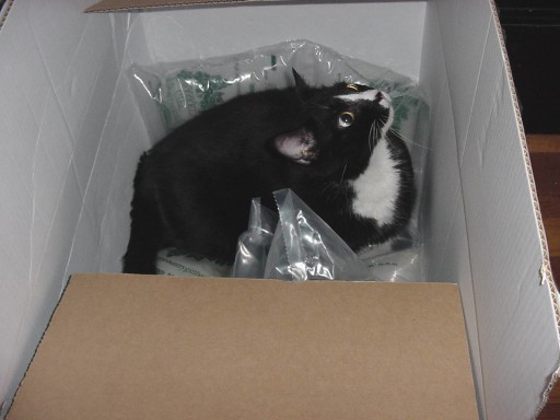 Louie did not come in a box but he was like a gift